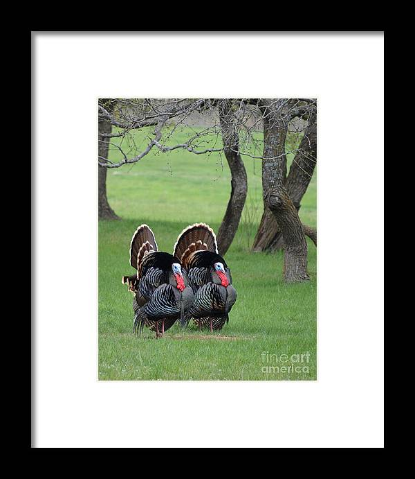 Tom Framed Print featuring the photograph Tom Tom by Gale Cochran-Smith