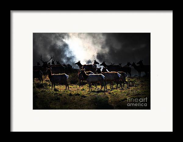 Bayarea Framed Print featuring the photograph Tomales Bay Harem Under The Midnight Moon - 7d21241 by Wingsdomain Art and Photography