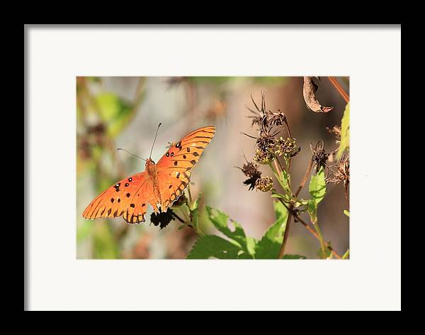 Animals Framed Print featuring the photograph Torn Wing And Dry Flowers by Cyril Maza