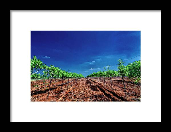 Tranquility Framed Print featuring the photograph Torre Di Pietra Winery by Dean Fikar