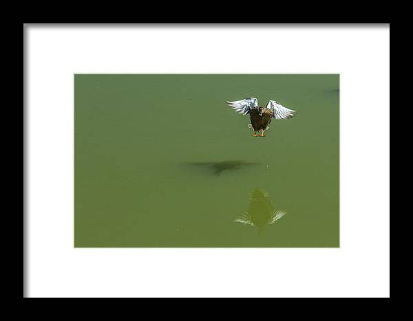 2014 Framed Print featuring the photograph Touch Down by Terry Thomas
