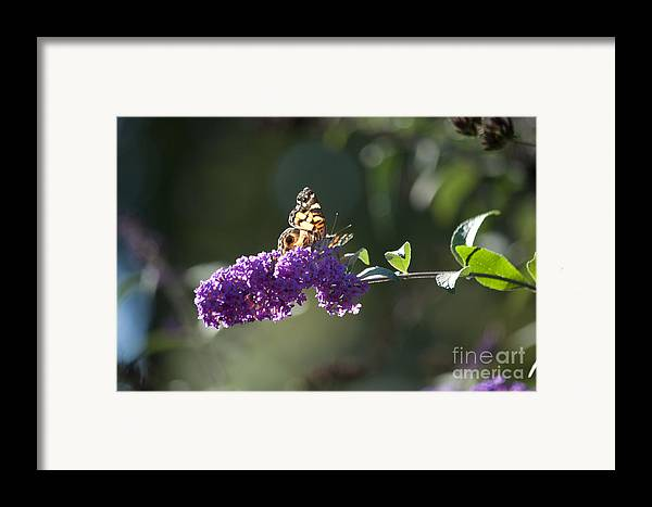 Butterfly Framed Print featuring the photograph Touchdown by Affini Woodley