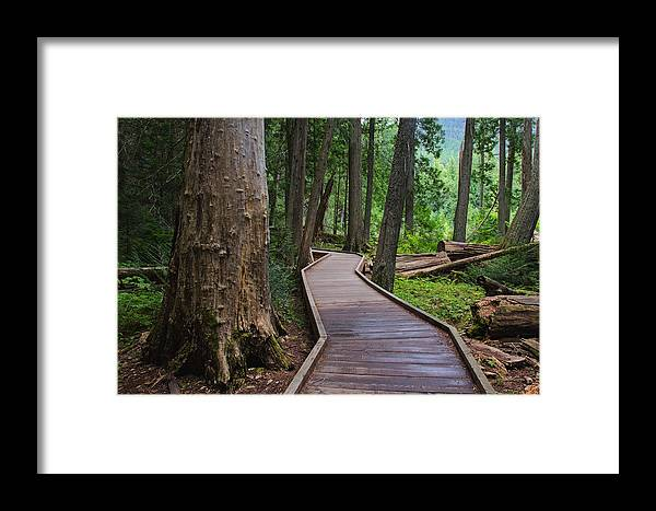 Landscape Framed Print featuring the photograph Trail Of The Cedars by Darlene Bushue
