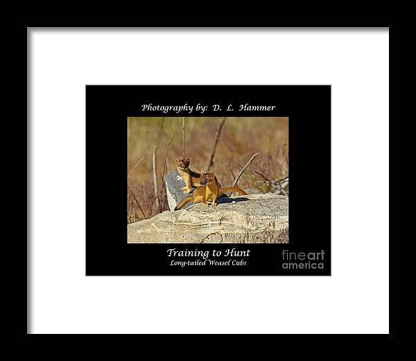 Wildlife Framed Print featuring the photograph Training To Hunt by Dennis Hammer