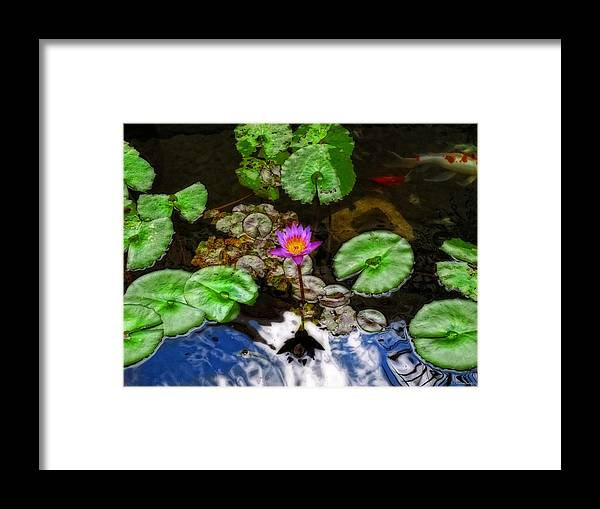 Lotus Framed Print featuring the painting Tranquility - Lotus Flower Koi Pond By Sharon Cummings by Sharon Cummings