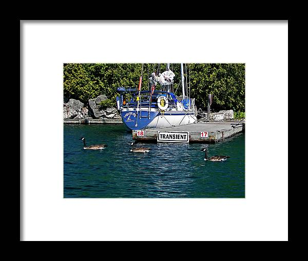 Yacht Framed Print featuring the photograph Transients by Steve Harrington