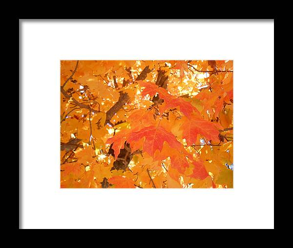 Autumn Framed Print featuring the photograph Transition by Diannah Lynch
