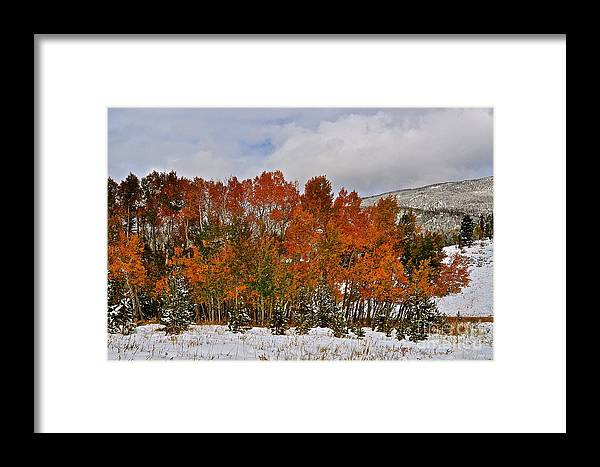 Fall Colors Framed Print featuring the photograph Transitions by Susan Chesnut
