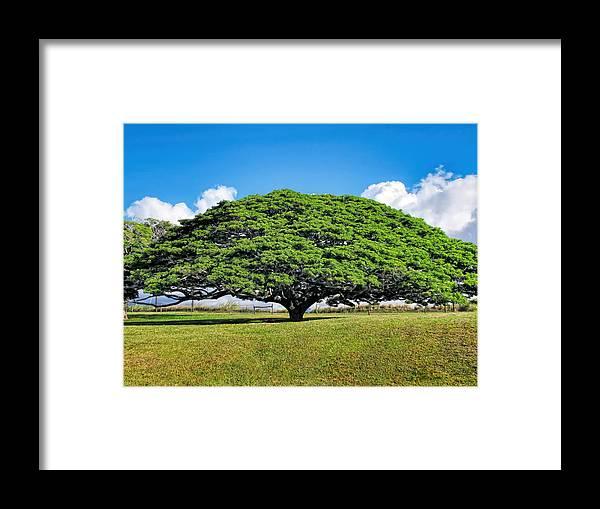 Hawaii Framed Print featuring the photograph Tree 10 by Dawn Eshelman