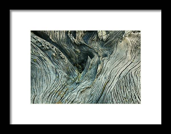 Tree Framed Print featuring the photograph Tree Art by Nicole Doering