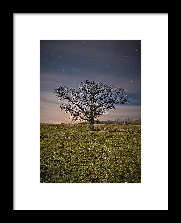 Tom Phelan Framed Print featuring the photograph Tree At Night by Tom Phelan