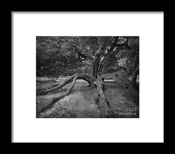 Aged Framed Print featuring the photograph tree at Normanby Park by Lesley Jane Smithers