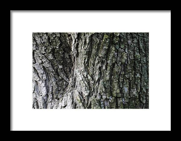 Tree Framed Print featuring the photograph Tree Bark 2 by Nicole Berna