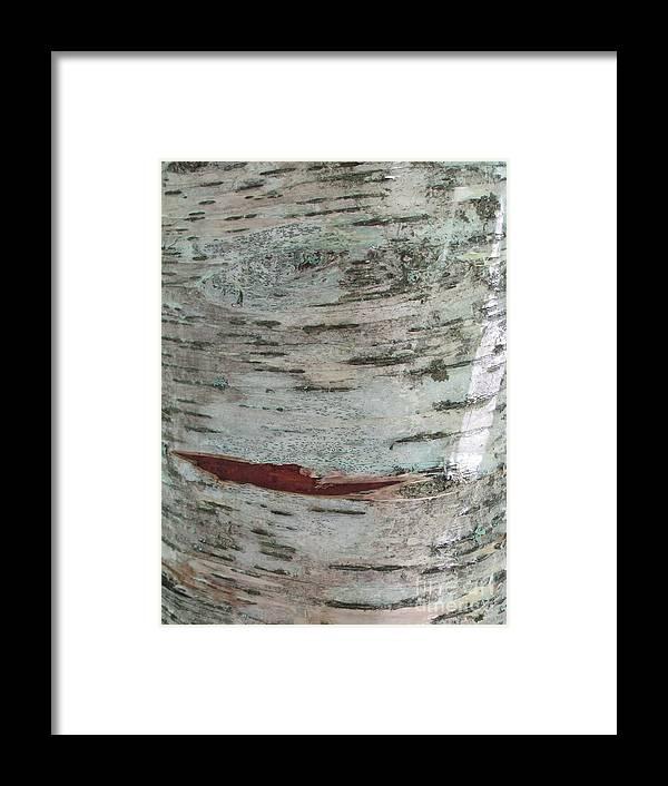 Tree Framed Print featuring the photograph Tree Bark by Anita Adams