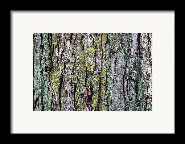 Tree Bark Detail Study Moss Nature Branches Leaves Green Framed Print featuring the mixed media Tree Bark Detail Study by Design Turnpike