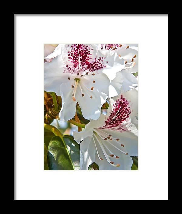 Dan Sabin Framed Print featuring the photograph Tree Blossom by Dan Sabin