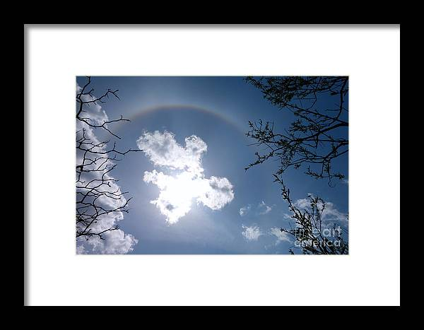 Sun Dog Framed Print featuring the photograph Tree Bow by Jacqueline Athmann