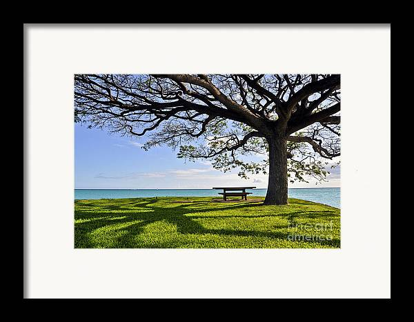 Ocean Framed Print featuring the photograph Tree Canopy by Gina Savage