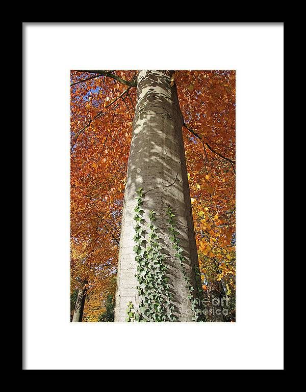 Tree Framed Print featuring the photograph Tree In Autumn by Alain Michiels