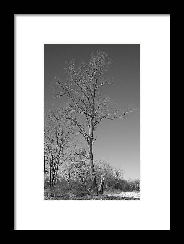 Tree Framed Print featuring the photograph Tree In Winter by Michelle Miron-Rebbe