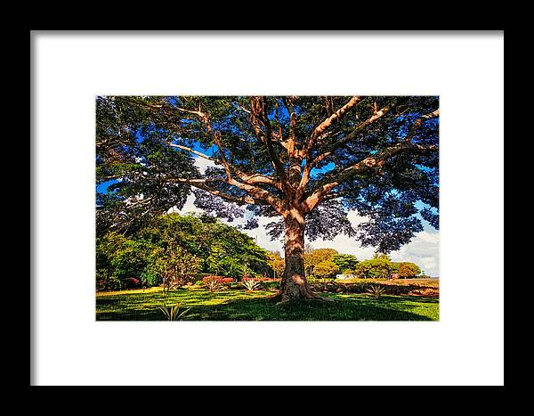 Maurituis Framed Print featuring the photograph Tree Of Joy. Mauritius by Jenny Rainbow