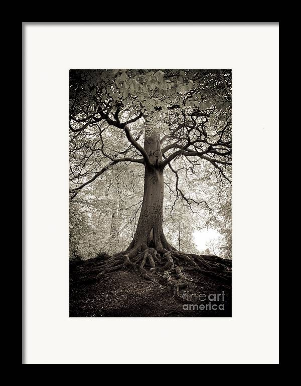 Tree Framed Print featuring the photograph Tree Of Life by Dominique De Leeuw