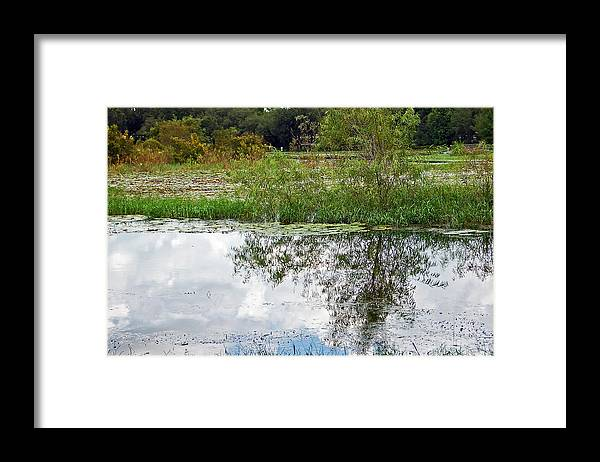 Tree Framed Print featuring the photograph Tree Reflecting In Pond by Aimee L Maher ALM GALLERY