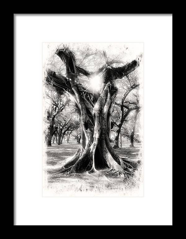 Trees Framed Print featuring the photograph Tree Series 28 by Carlos Diaz