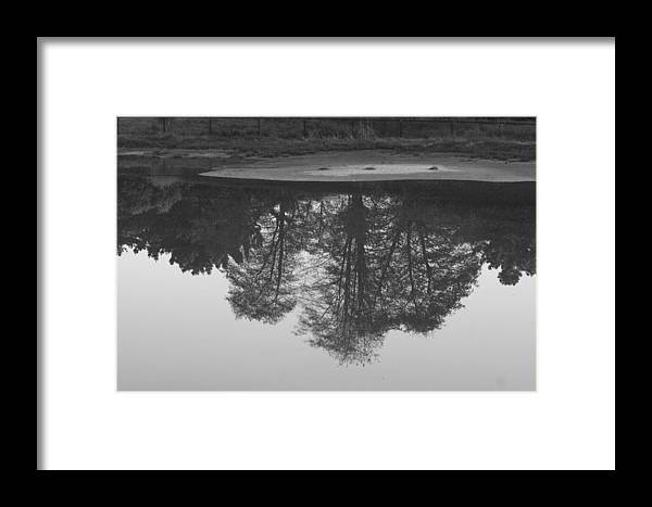 Black And White Framed Print featuring the photograph Tree Water Reflection 21 by Pico Soriano