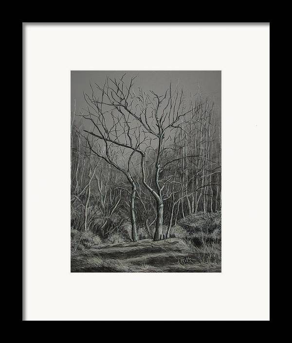 Trees Framed Print featuring the drawing Trees Along The Greenway by Janet Felts