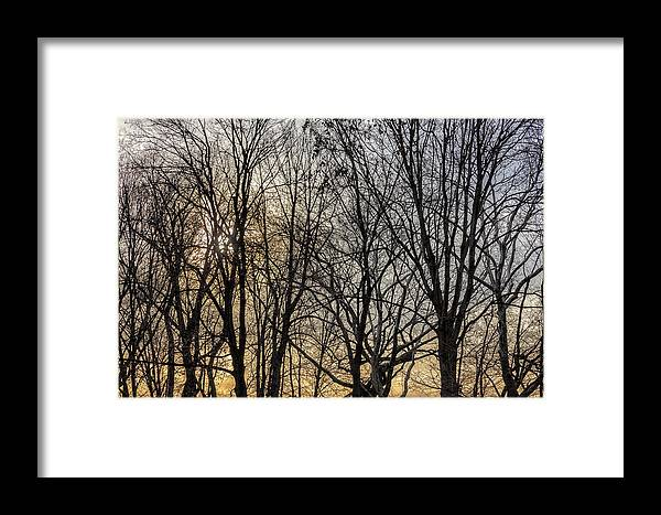 Trees And Late Afternoon Light Framed Print featuring the photograph Trees And Late Afternoon Light by Robert Ullmann