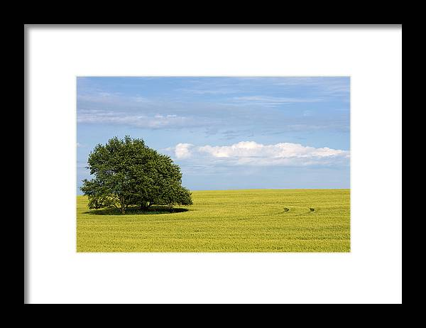 Grass Family Framed Print featuring the photograph Trees In Wheat Field by Simplycreativephotography