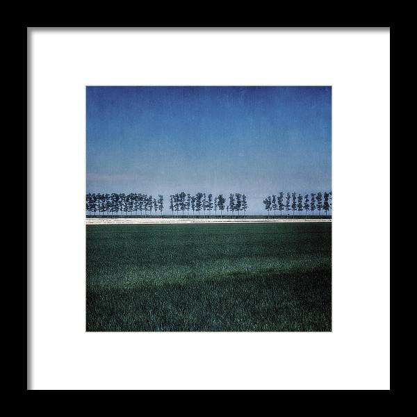 Tree Framed Print featuring the photograph Trees by Joana Kruse