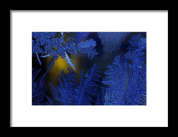 Detail Framed Print featuring the photograph Trice by Nathan Seavey
