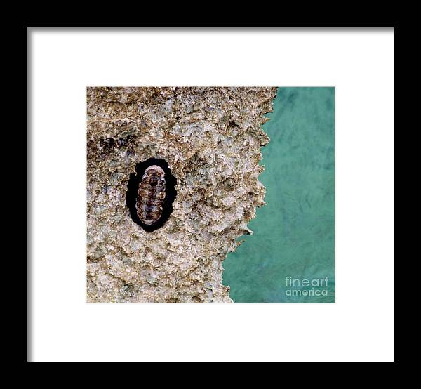 Color Framed Print featuring the photograph Trilobite by Amar Sheow