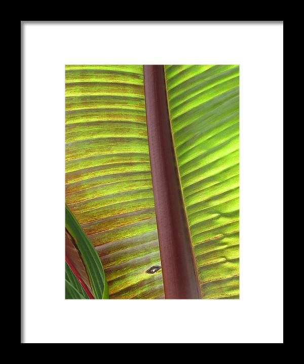 Duane Mccullough Framed Print featuring the photograph Tropical Banana Leaf Abstract by Duane McCullough