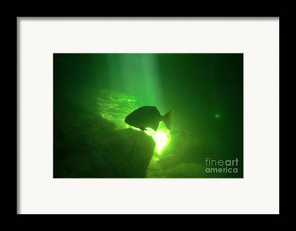 Tropical Fish Shilouette In A Cenote Framed Print featuring the photograph Tropical Fish Shilouette In A Cenote by Halifax photography by John Malone