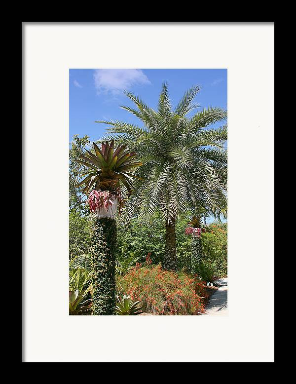 Palm Framed Print featuring the photograph Tropical Garden by Kim Hojnacki