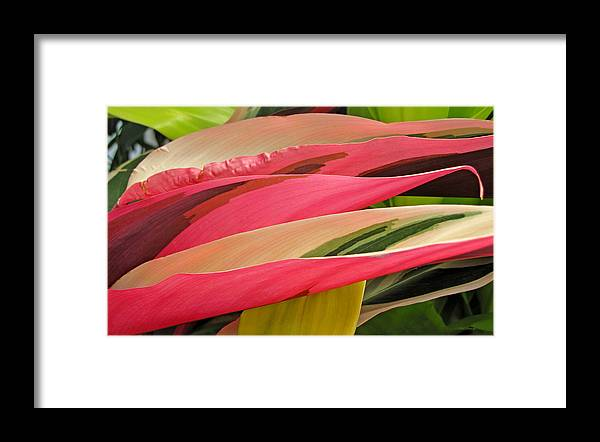 Duane Mccullough Framed Print featuring the photograph Tropical Leaves Abstract 3 by Duane McCullough
