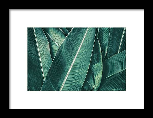 Spa Framed Print featuring the photograph Tropical Palm Leaf, Dark Green Toned by Pernsanitfoto