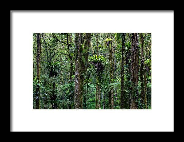 Tropical Rainforest Framed Print featuring the photograph Tropical Rain Forest by Gavriel Jecan