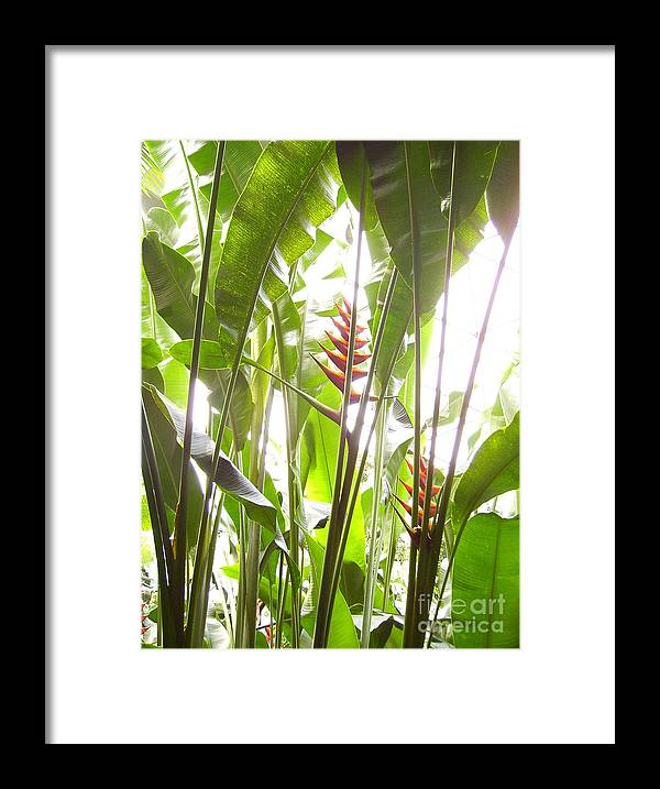 Plants Framed Print featuring the photograph Tropical2 by Heather Morris