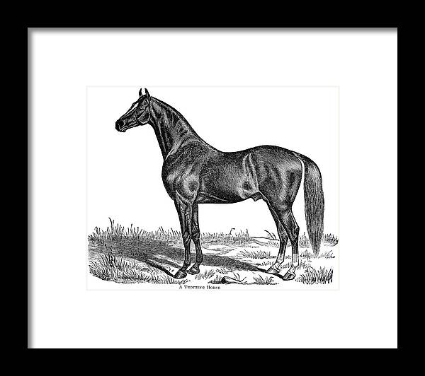 Horse Framed Print featuring the digital art Trotting Horse Engraving by Nnehring