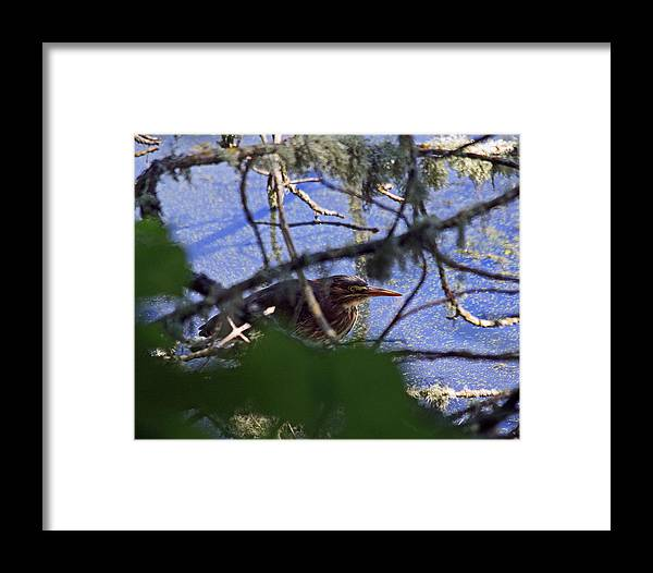 Green Framed Print featuring the photograph Trying To Hide by Chris Anderson