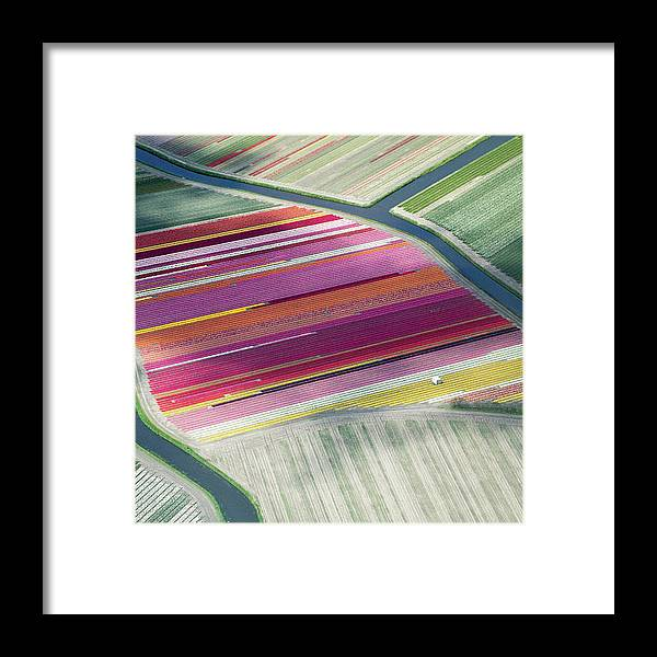 Curve Framed Print featuring the photograph Tulip Fields, Aerial View, South by Frans Sellies