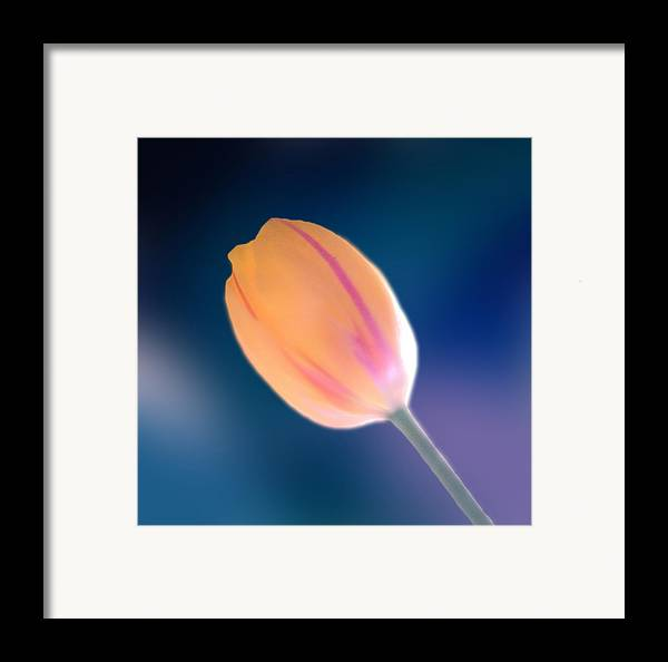 Marcin Framed Print featuring the photograph Tulip by Marcin and Dawid Witukiewicz