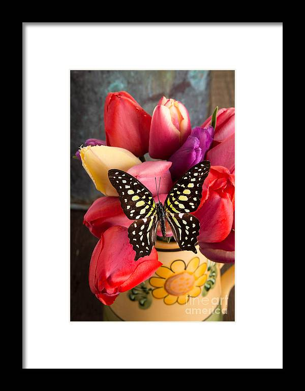 Bloom Framed Print featuring the photograph Tulips And Butterflies by Edward Fielding