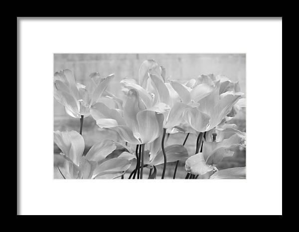 Black And White Framed Print featuring the photograph Tulips Oxford by Gerry Walden