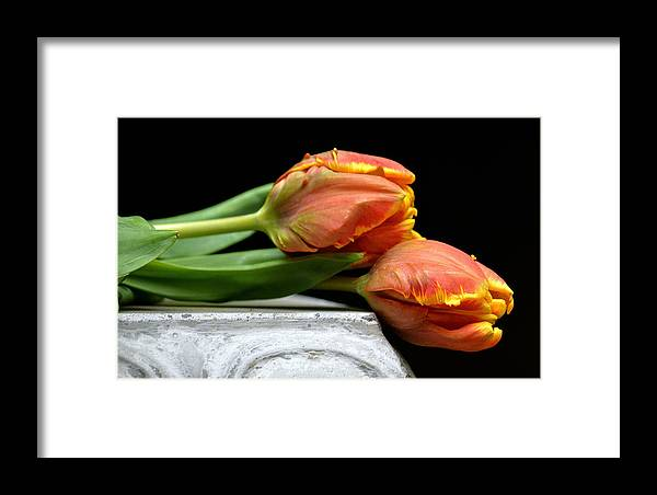 Parrot Tulips Framed Print featuring the photograph Tulips Together by Fraida Gutovich