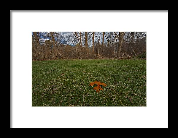 Cape Cod Framed Print featuring the photograph Tupper Leaf by David DeCenzo
